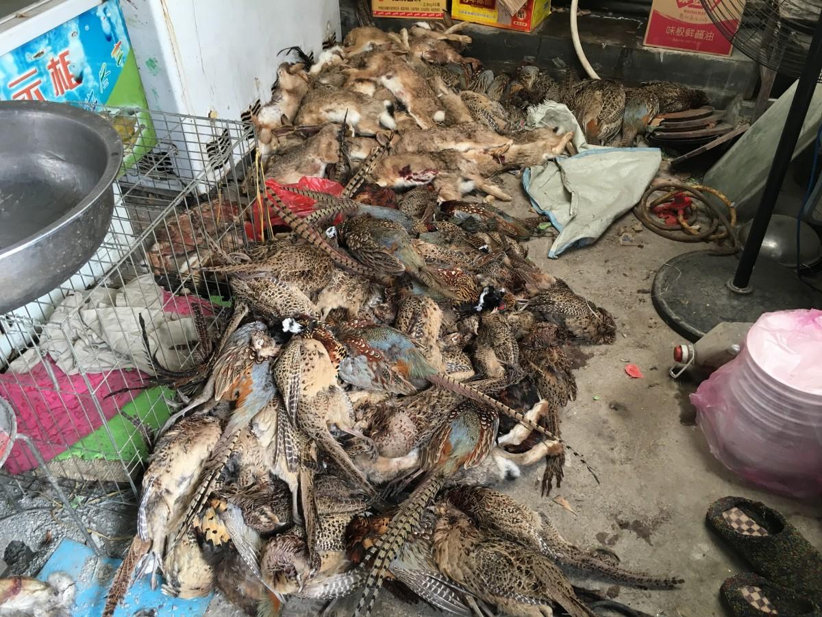 成堆的死掉的野生动物
