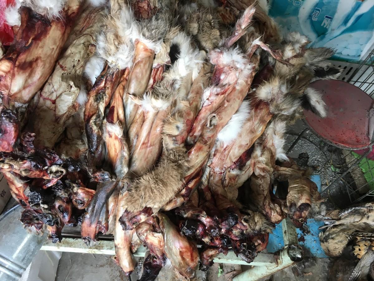 成堆的野兔皮