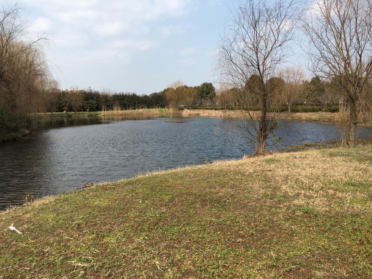 冬末春初的水塘
