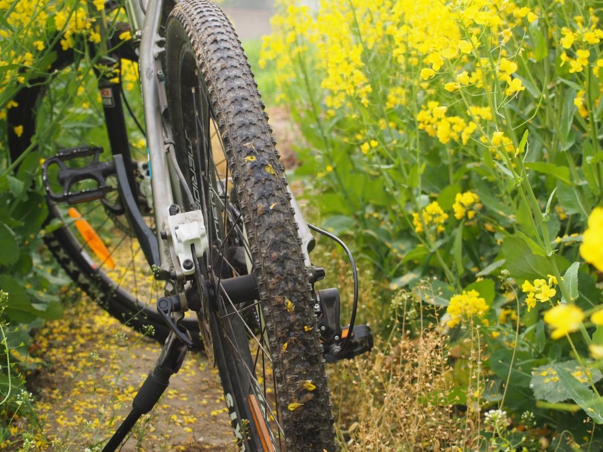 我的自行车,没忍住合个影吧