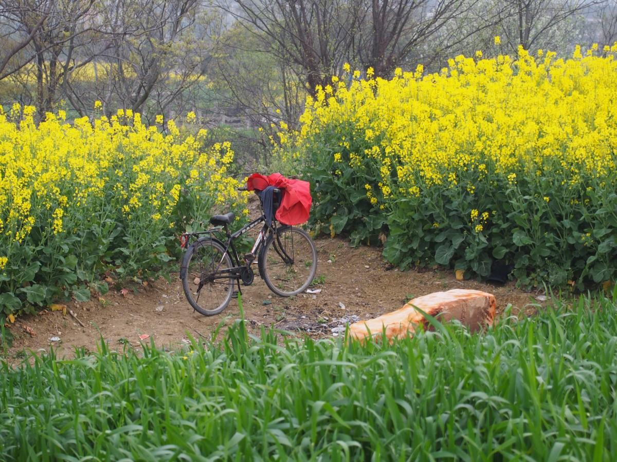 村人很早就骑车来田间作业