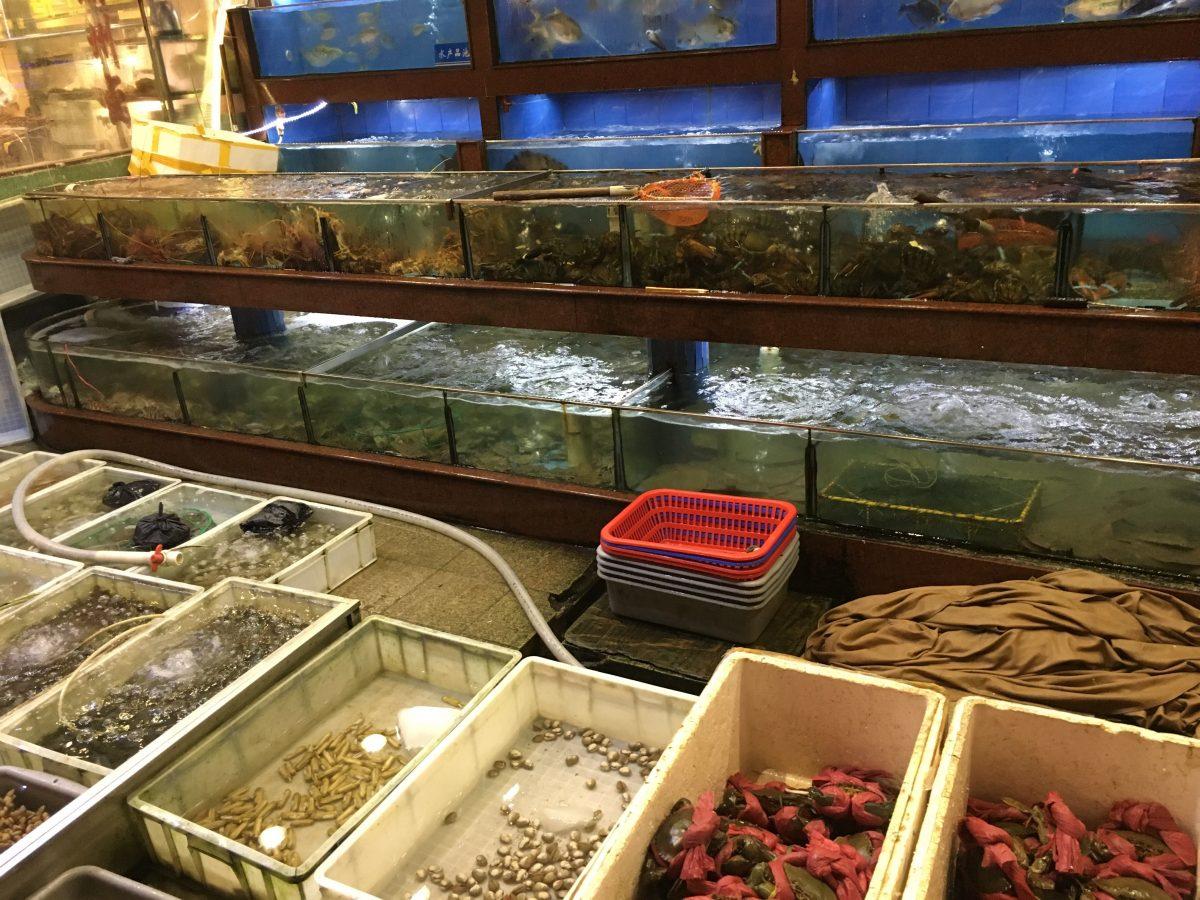 深圳华城渔港