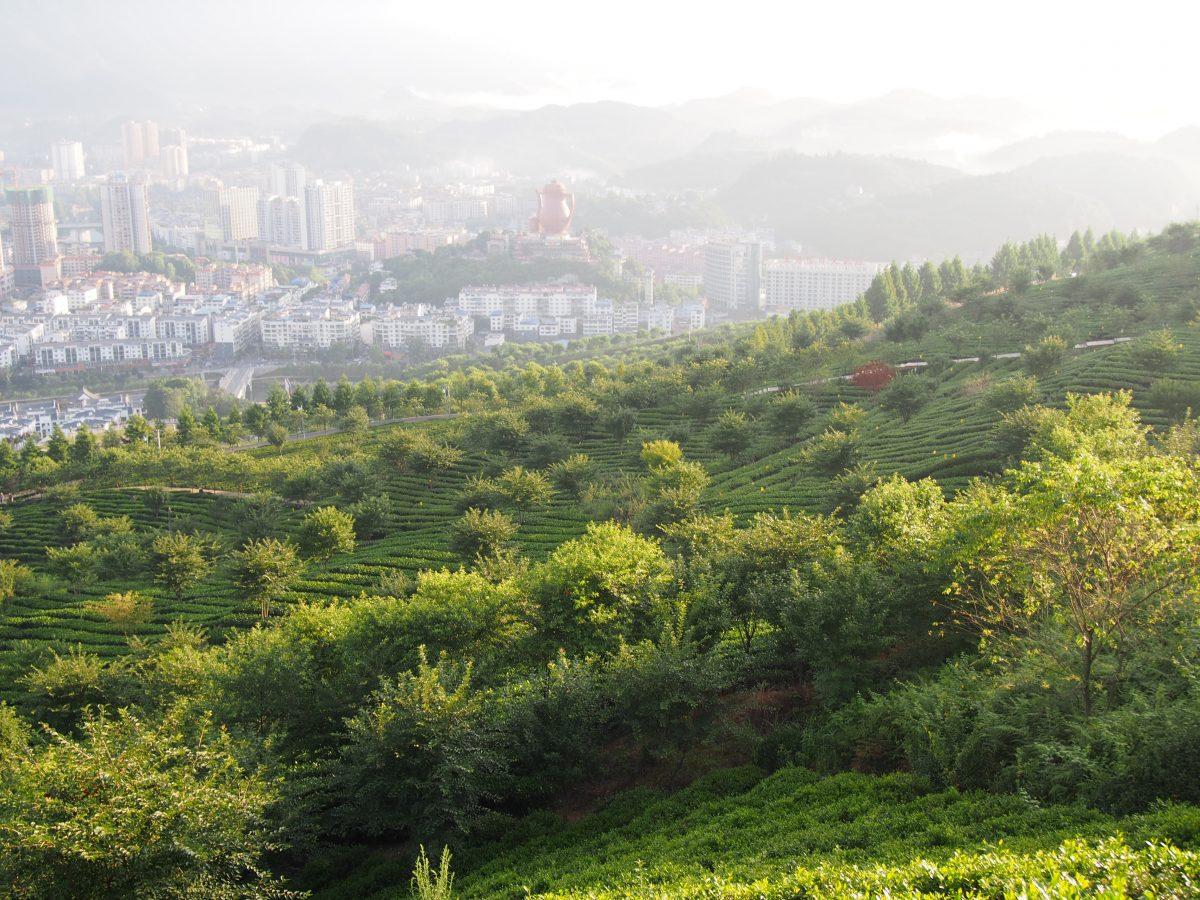湄潭·象山茶园